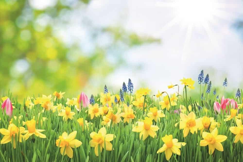 Ostern Live Online Retreat